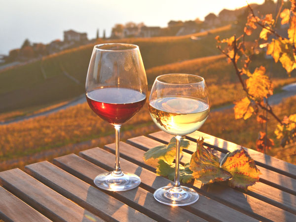 Autumn Wines